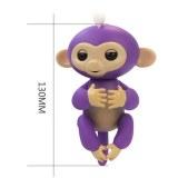 Cenocco CC-9048; Happy Monkey Púrpura
